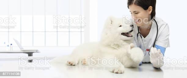 Veterinary examination dog blood test veterinarian hand with syringe picture id877114136?b=1&k=6&m=877114136&s=612x612&h=ipzl bgmpvakaptnb6mjwnxbx 3vdpwstpedov91hry=
