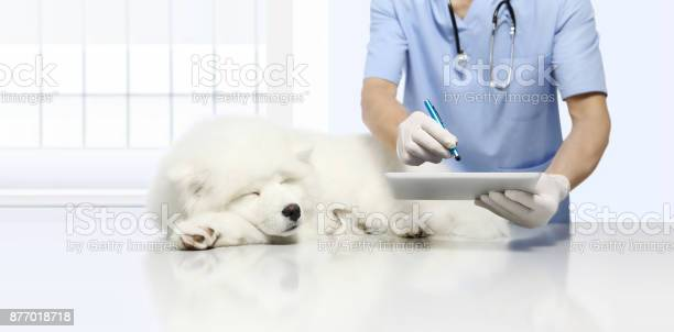 Veterinary examination sick dog and using digital tablet on vet picture id877018718?b=1&k=6&m=877018718&s=612x612&h=rclbmqxduin7kg84datmgeqhawx9i1xl9ynzir3l 6g=