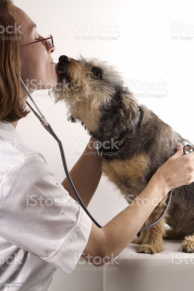 veterinary examines dog royalty-free stock photo