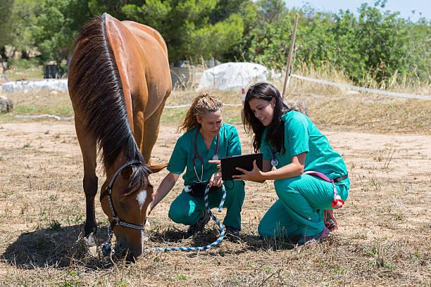 Veterinary horses on the farm picture id584204466?b=1&k=6&m=584204466&s=612x612&w=0&h=n5zy zui2a8ra3lgm pjexi9ydx3lraaiilsblyi0dw=