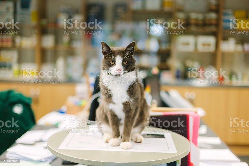 Veterinary Hospital cat stock photo