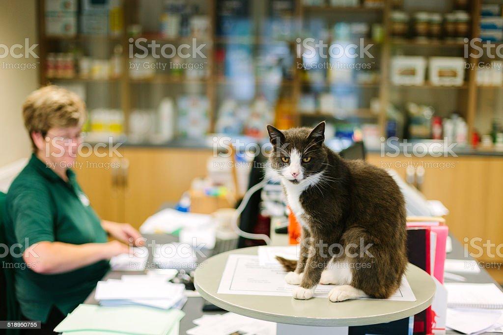 Veterinary Hospital reception cat stock photo