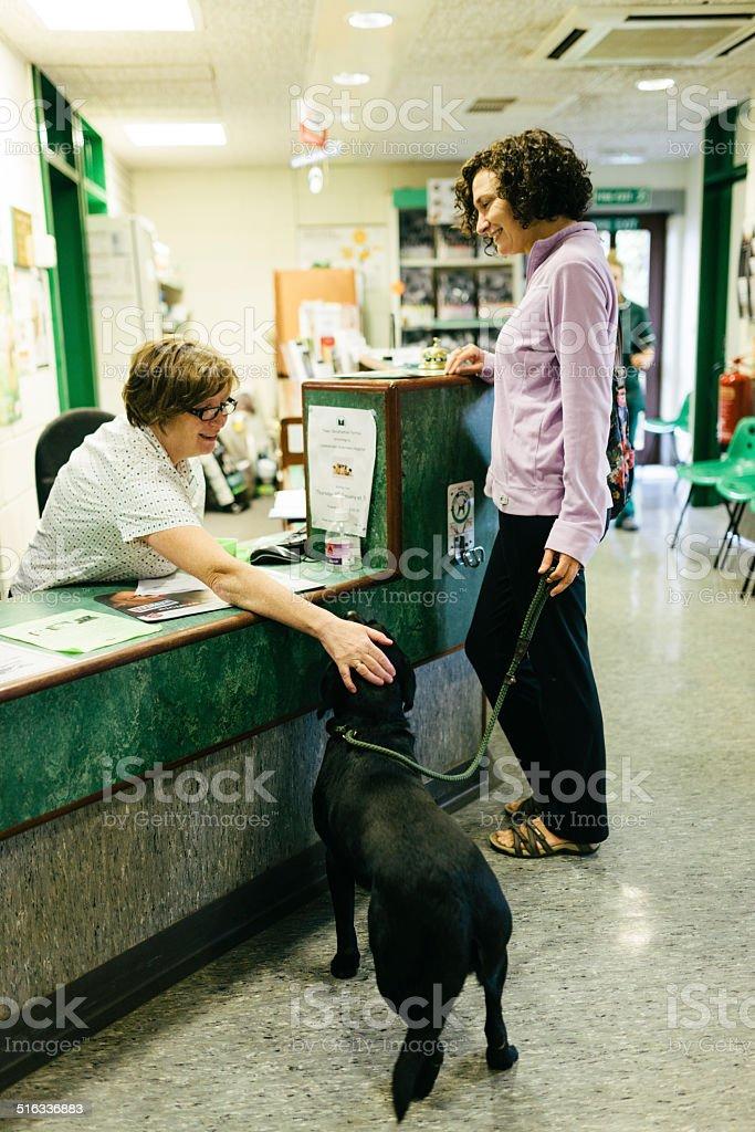 Veterinary Hospital reception stock photo