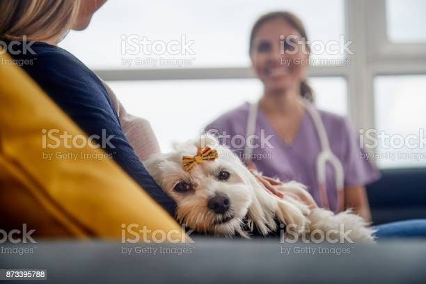 Veterinary house call with doctor dog owner and pet picture id873395788?b=1&k=6&m=873395788&s=612x612&h=9wy23kgnwmszkwtxntodiy0et67yupnfjviyfpkhmve=