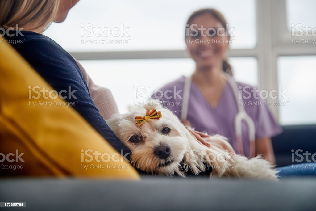 Veterinary House Call With Doctor Dog Owner And Pet stock photo