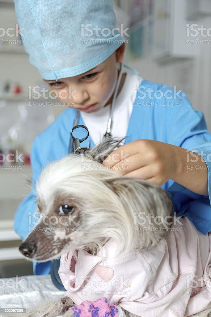Veterinary inspection royalty-free stock photo
