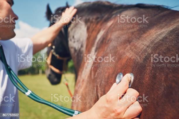 Veterinary medicine at farm picture id807753502?b=1&k=6&m=807753502&s=612x612&h=del a7ectc6hutaxchd6agyq7alwuohq3gqivjuwwxo=