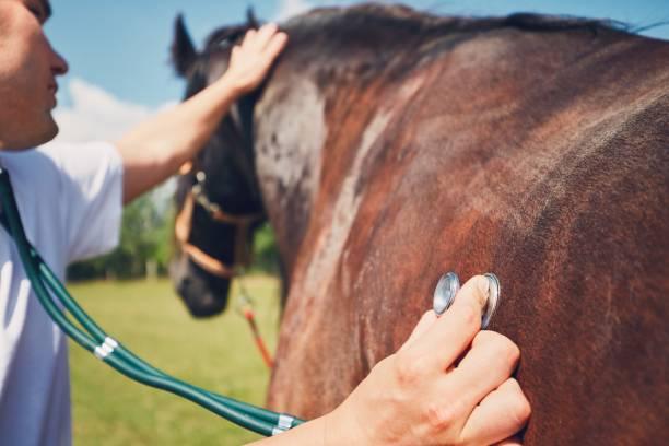 Veterinary medicine at farm picture id807753502?b=1&k=6&m=807753502&s=612x612&w=0&h=z1fjuqkd8lzjtqegdehw68aldrzlmymqdulf7rqxfwg=