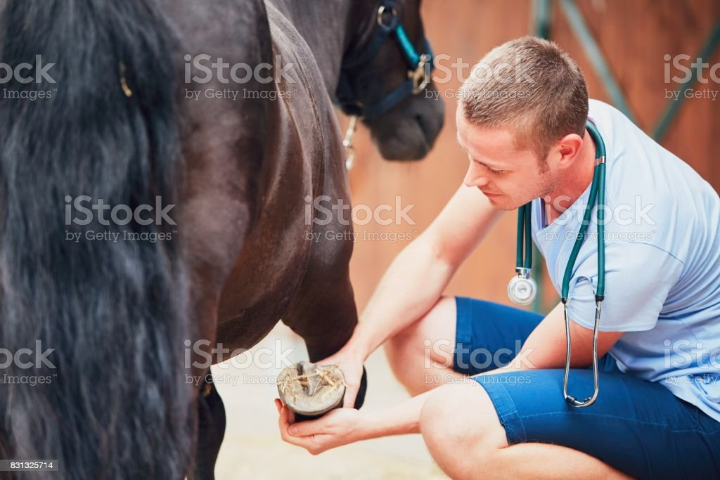 Veterinary medicine at the farm stock photo