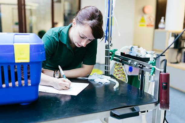 Veterinary Nurse stock photo