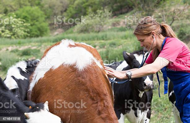 Veterinary On A Farm Stock Photo - Download Image Now