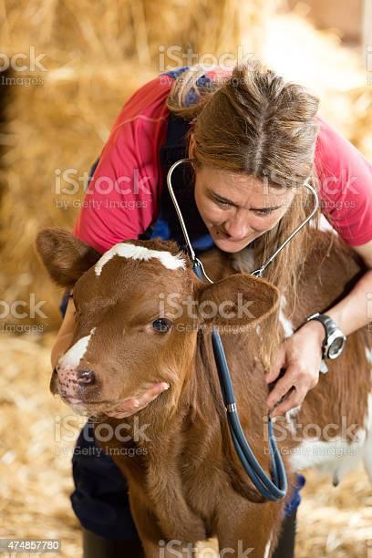 Veterinary on a farm picture id474857780?b=1&k=6&m=474857780&s=612x612&h=vzmdnnwpzkk vp qt19chjrueqavm0s5rk0i3n 2zi0=