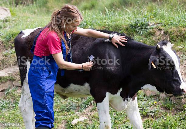 Veterinary on a farm picture id484470438?b=1&k=6&m=484470438&s=612x612&h=9sqiconf2txi qe9io5kajjmtby27zi9msp6q4usgbg=