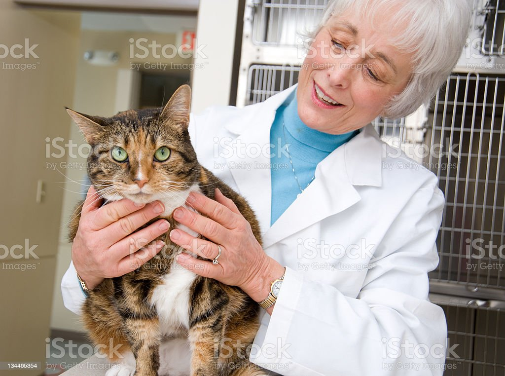Veterinary royalty-free stock photo
