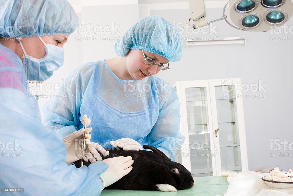 Veterinary royalty-free stock photo