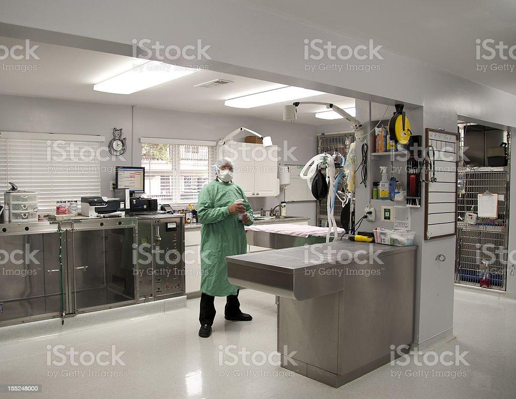 veterinary surgeon at his practice stock photo