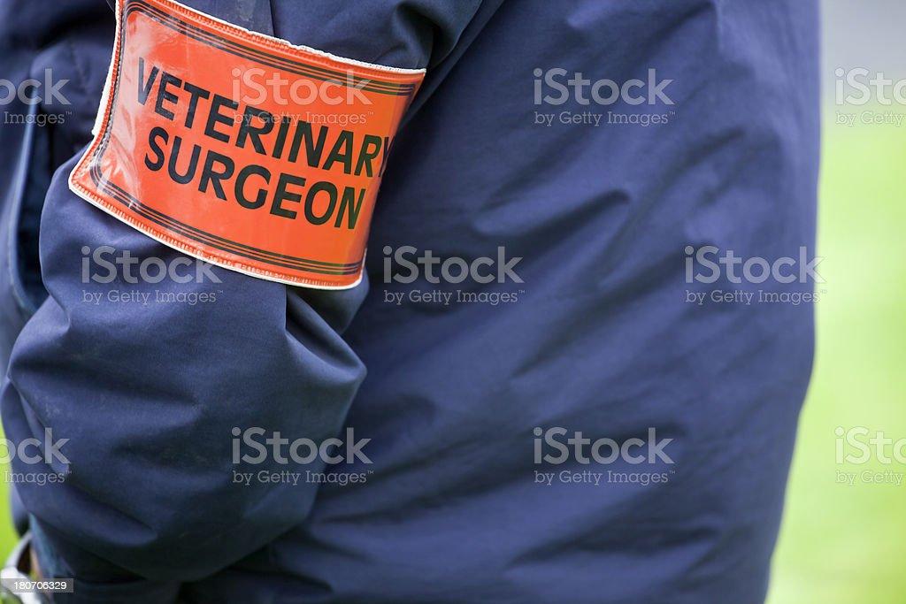 Veterinary Surgeon in Attendance royalty-free stock photo