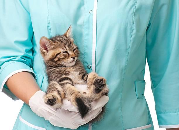 Veterinary survey picture id505055424?b=1&k=6&m=505055424&s=612x612&w=0&h= qwnwerrhkqufneciwdh12rx7tfq1b8wonhavl9xt1a=