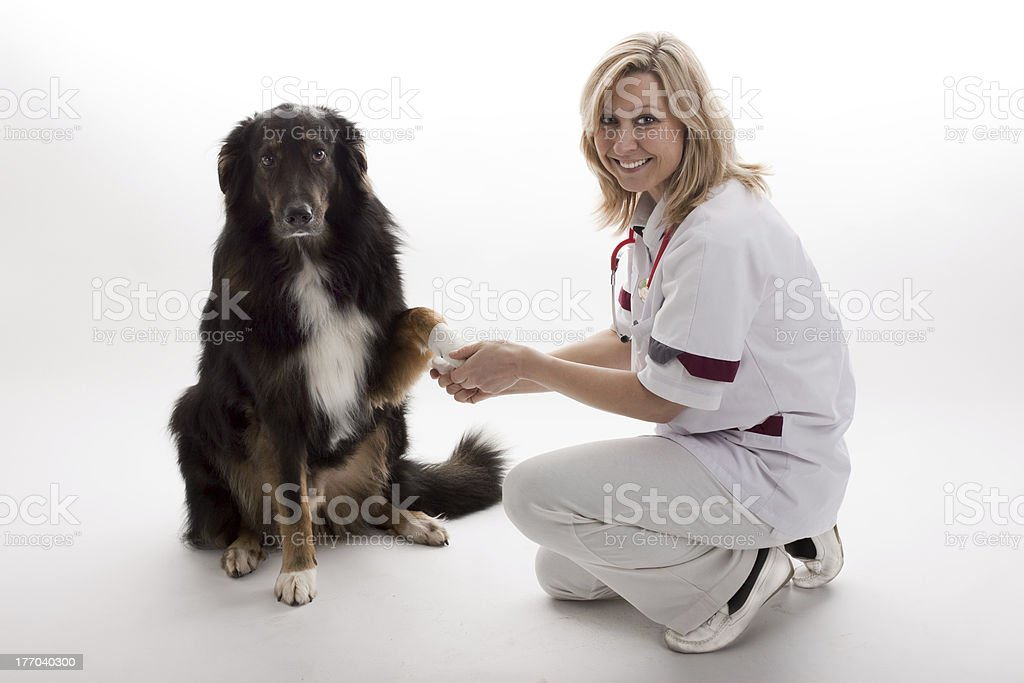 veterinary with dog royalty-free stock photo