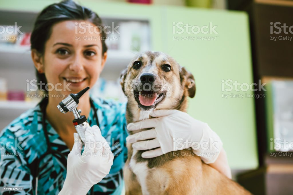 Veterinary woman and dog stock photo