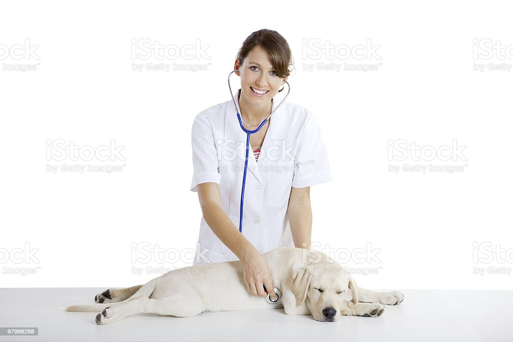 Veterinay taking care of a dog royalty free stockfoto
