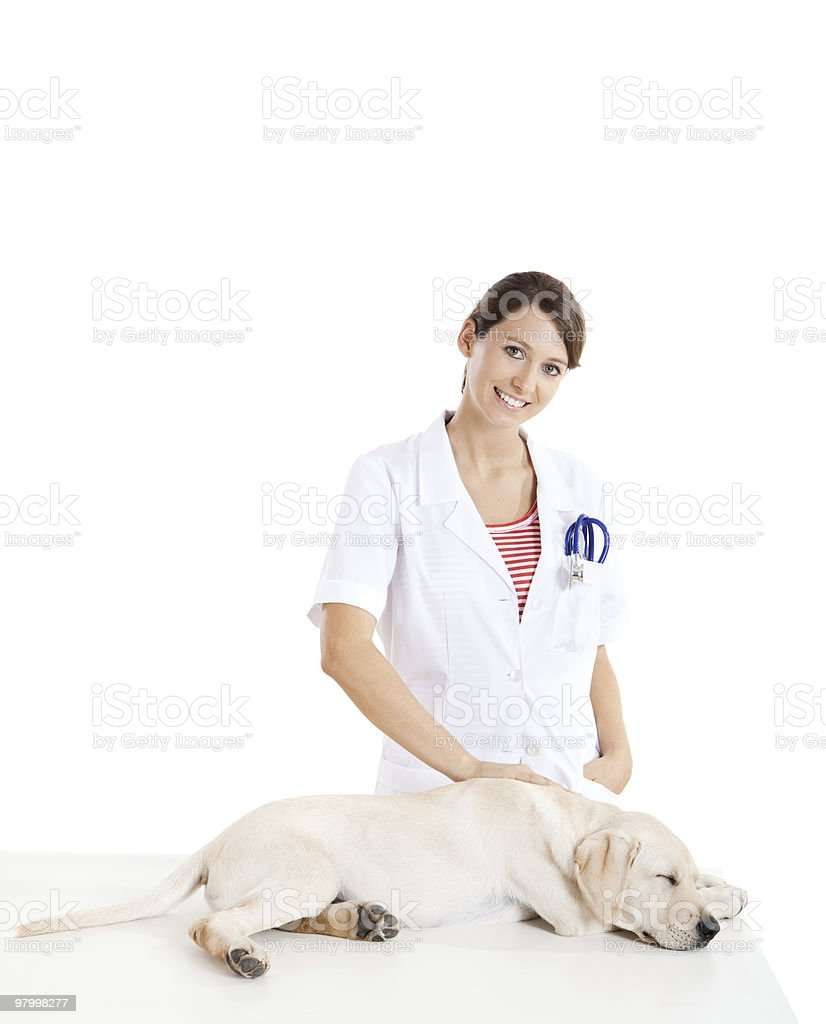 Veterinay taking care of a dog royalty-free stock photo