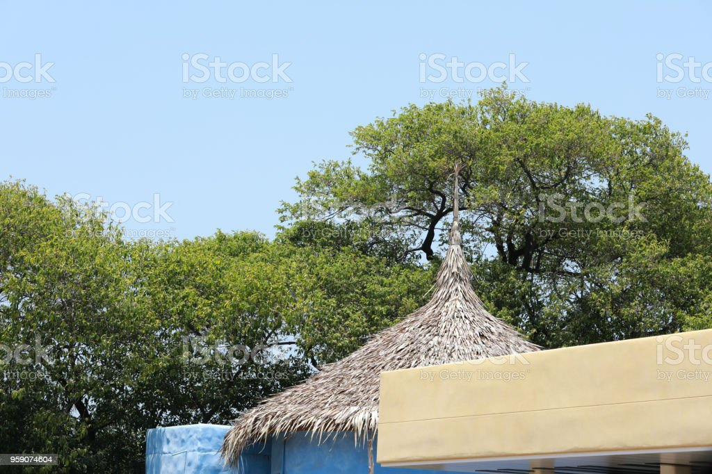 vetiver grass roof modern with green tree on background stock photo