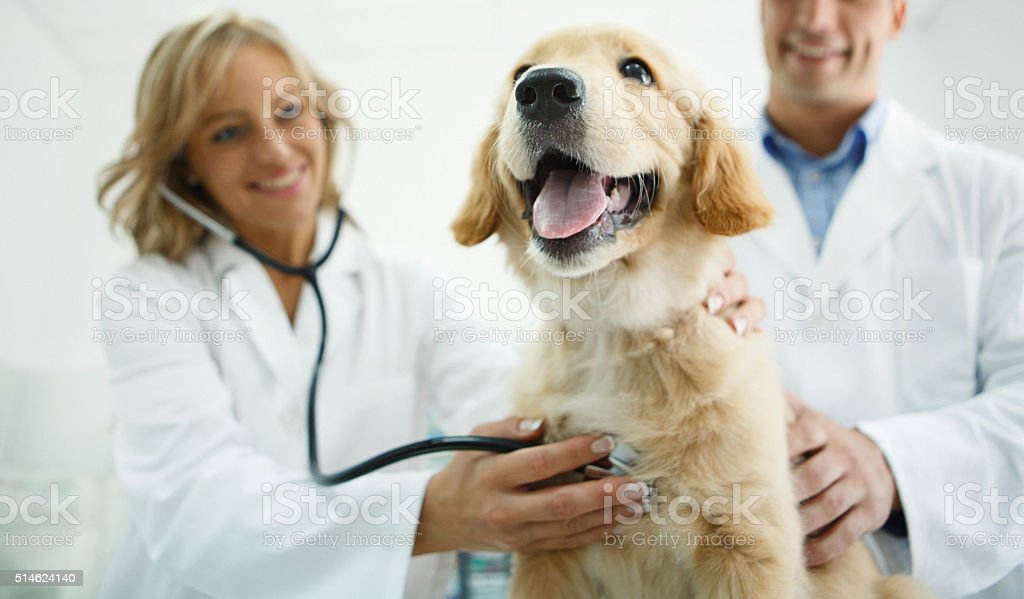 Veterinarios examinando un perro. - foto de stock