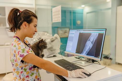 Vets examining X-ray
