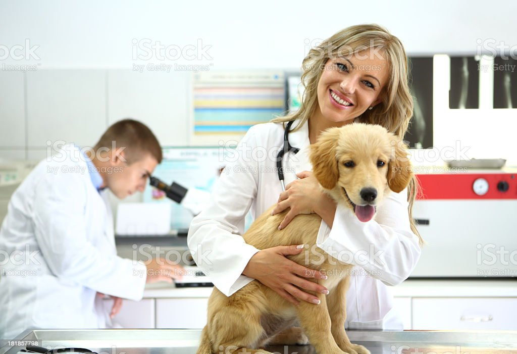 Vets with healthy retriever puppy stock photo