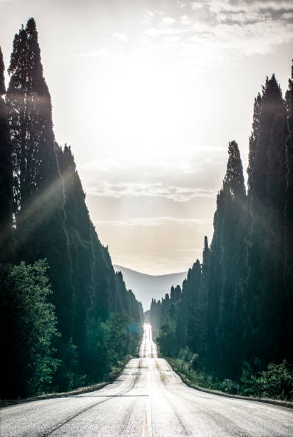 Viale dei cipresi cypresses tree road in Bolgheri in the morning. Tuscany - foto stock