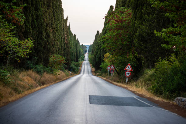 Viale dei cipresi cypresses tree road in Bolgheri. Tuscany - foto stock