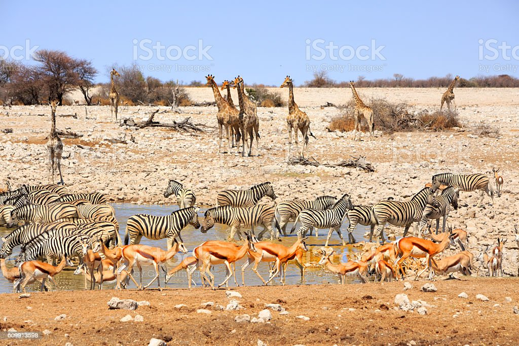 Vibran waterhole in Etosha stock photo