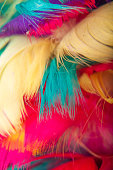 Vibrant Abstract Feather