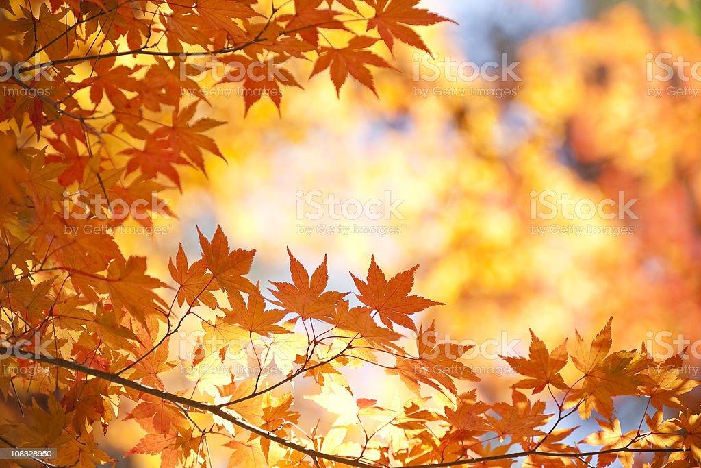 Vibrant Autumn Color stock photo