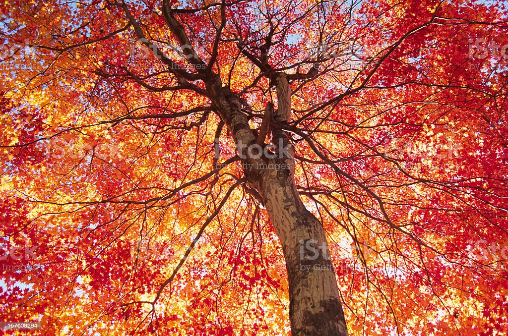 Vibrant Autumn Color stock photo
