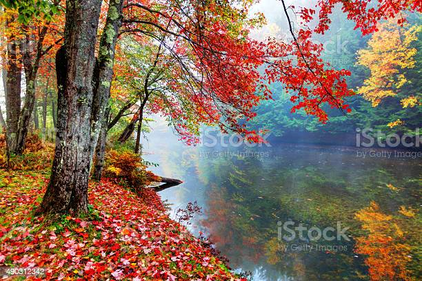 Photo of Vibrant autumn colors along a small stream in New Hampshire