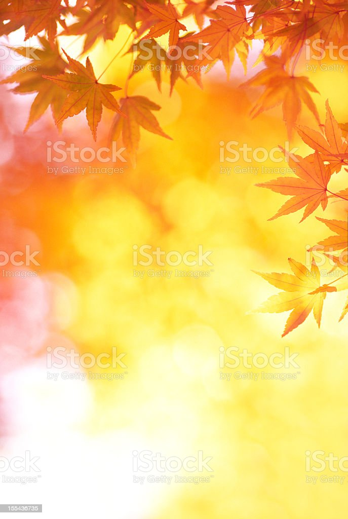 Vibrant Autumn Colors royalty-free stock photo