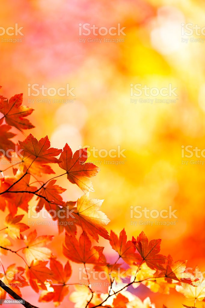 Vibrant Autumn Colors stock photo