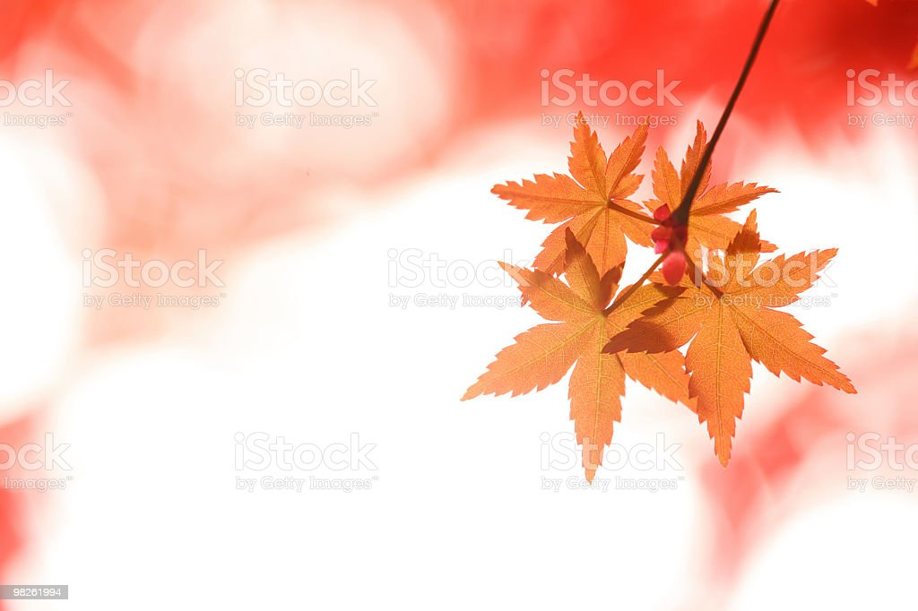 Vibrant Autumn Colors royalty-free stock photo