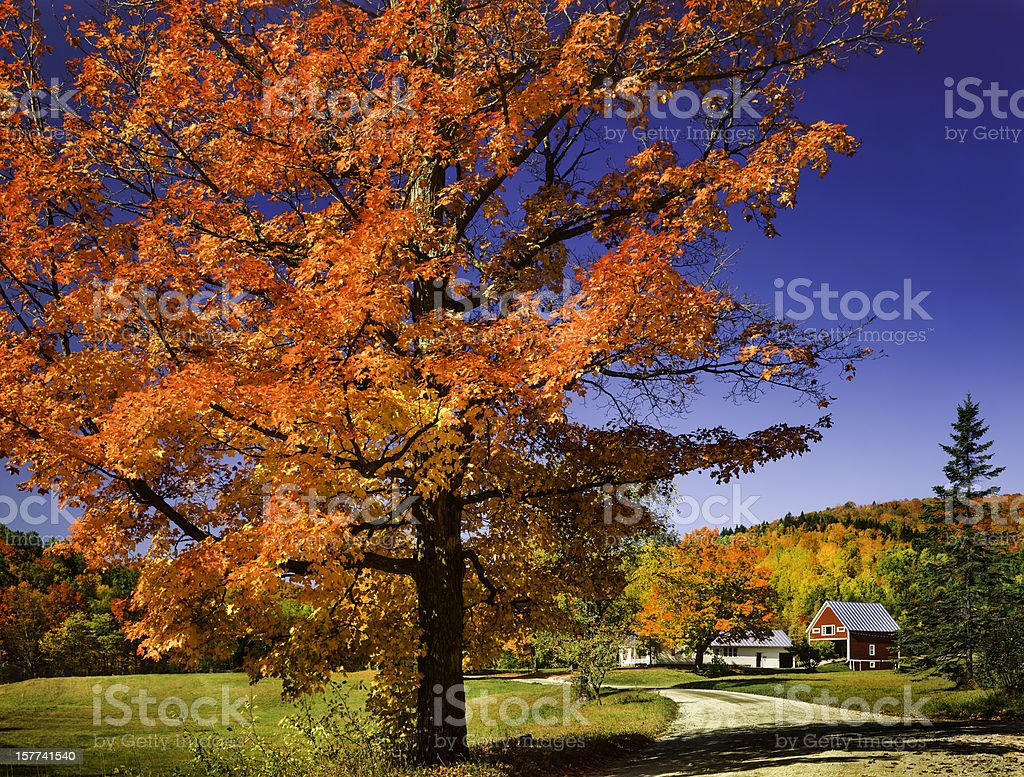 vibrant autumn maple tree, country road and Vermont countryside stock photo