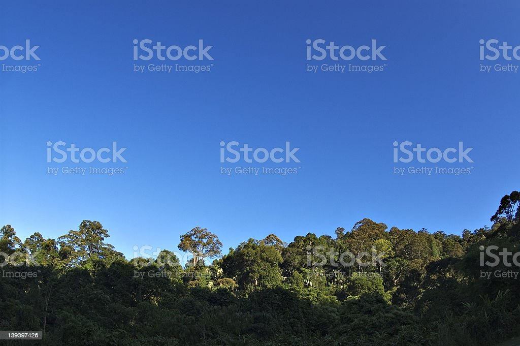 Vibrant blue sky on a sunny morning royalty-free stock photo