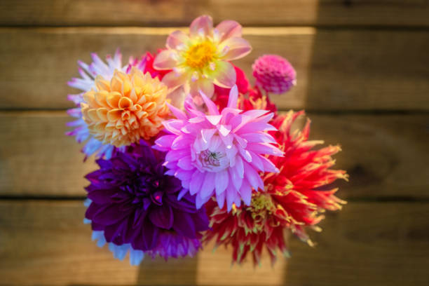 Vibrant bouquet of colorful dahlias, overhead view on wood deck or table. stock photo