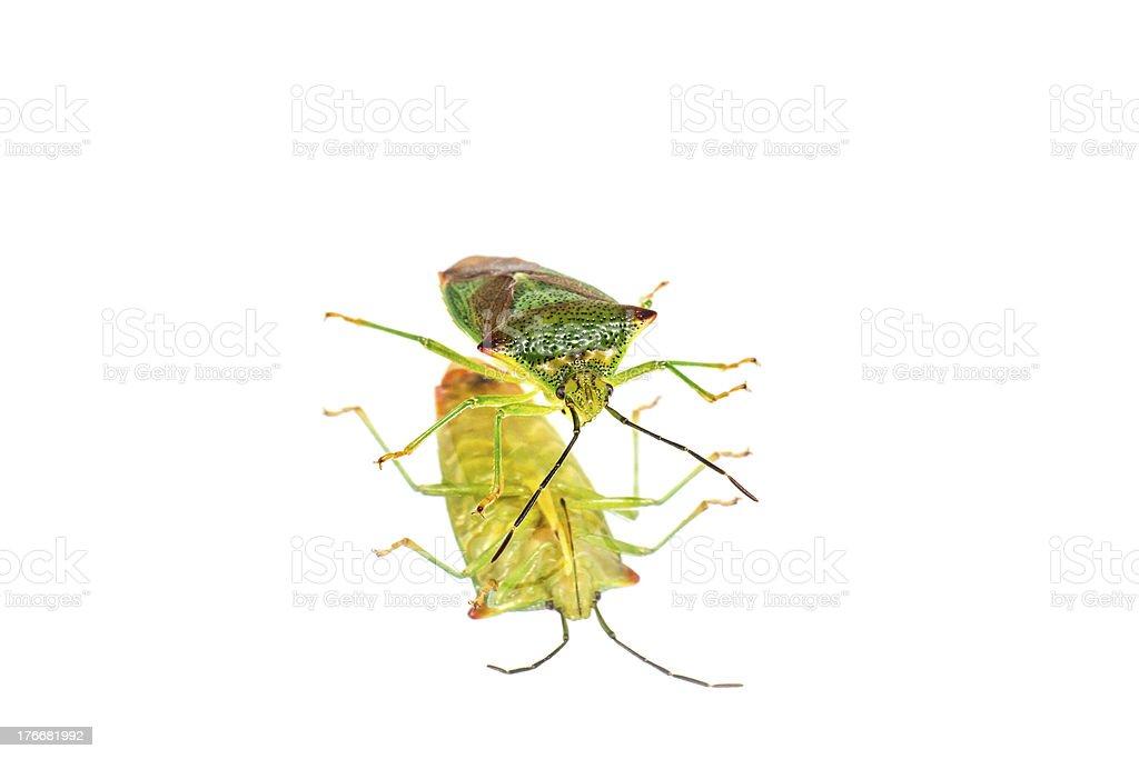 Vibrant bug royalty-free stock photo