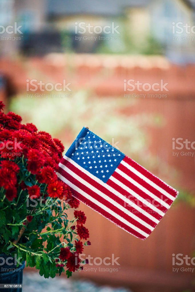 Vibrant chrysanthemums with American flag stock photo