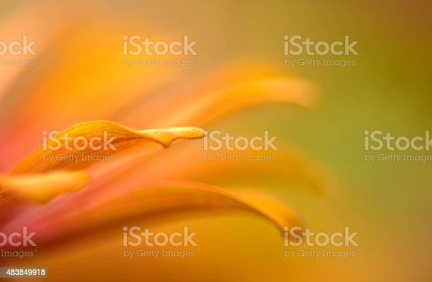 Photo of Vibrant close up of an orange and pink zinnia flower