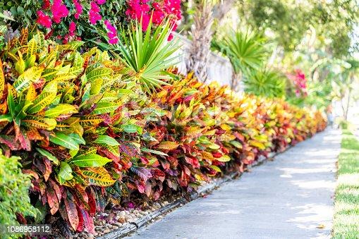 istock Vibrant codiaeum variegatum, petra croton, variegated plant leaf, leaves, landscaped garden, landscaping wall, outside, outdoor street, green grass, road, street sidewalk in tropical Florida keys 1086958112