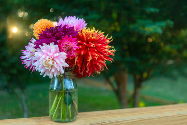 Vibrant colors, bouquet of colorful dahlias, on deck railing, Horizontal image with sun flare, bokeh and copy space. Floral background image. stock photo