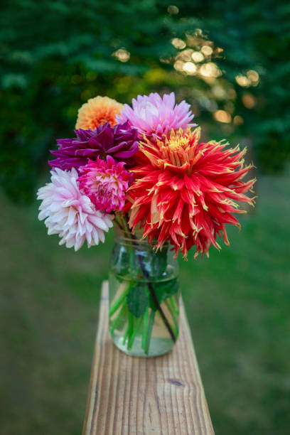 Vibrant colors, bouquet of colorful dahlias, on deck railing, vertical image with bokeh and symmetry. stock photo