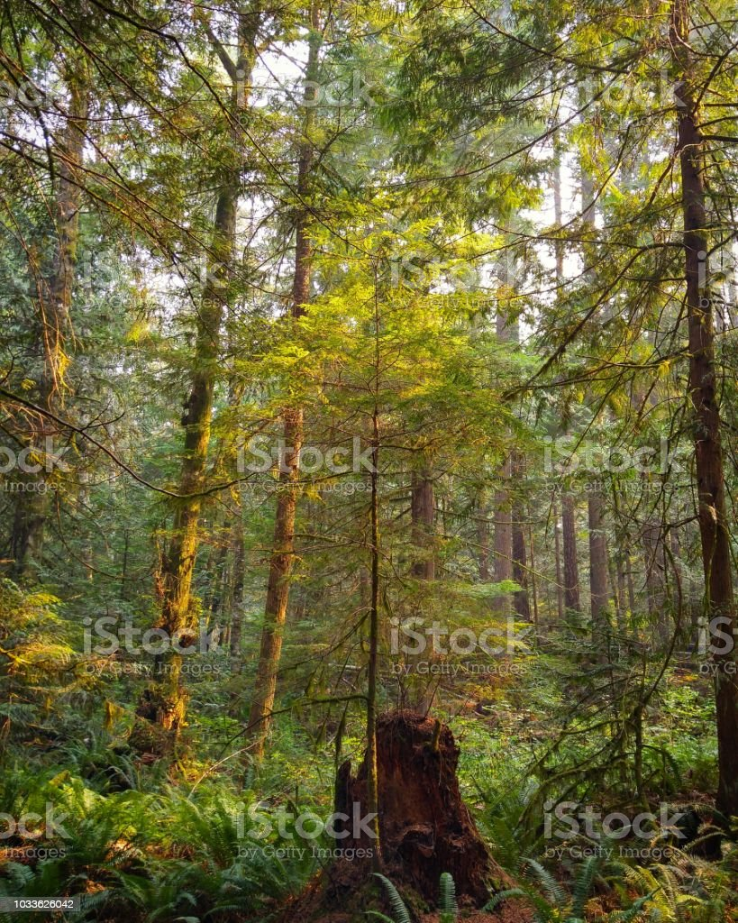 Vibrant colors in a forest in late summer stock photo